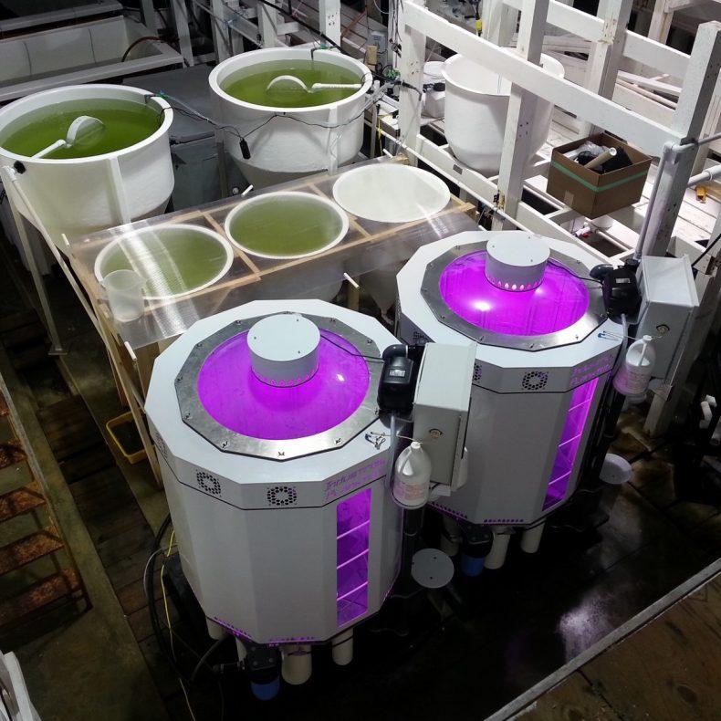 Photobioreactor for microalgae