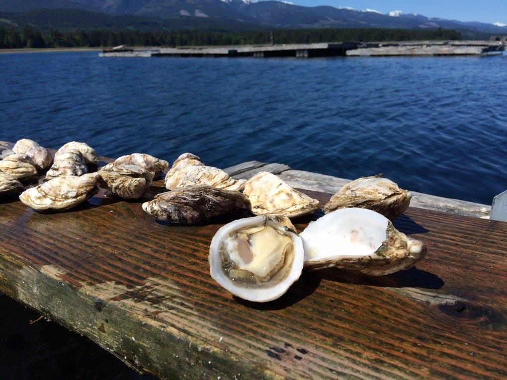 Keith Reid's Kushi Oysters British Columbia